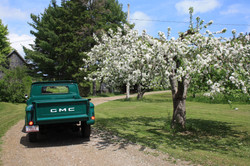 Green truck during blossom