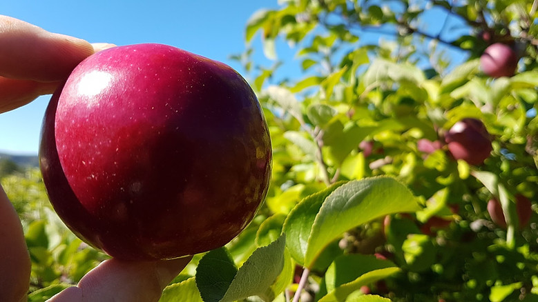 Mackay Apple