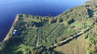 Mackay Orchard