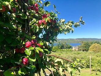 Mackay Apple Orchard