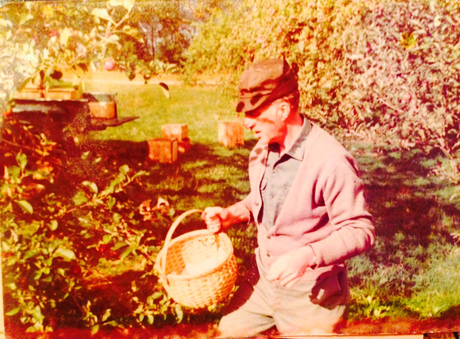 Yip picking apples