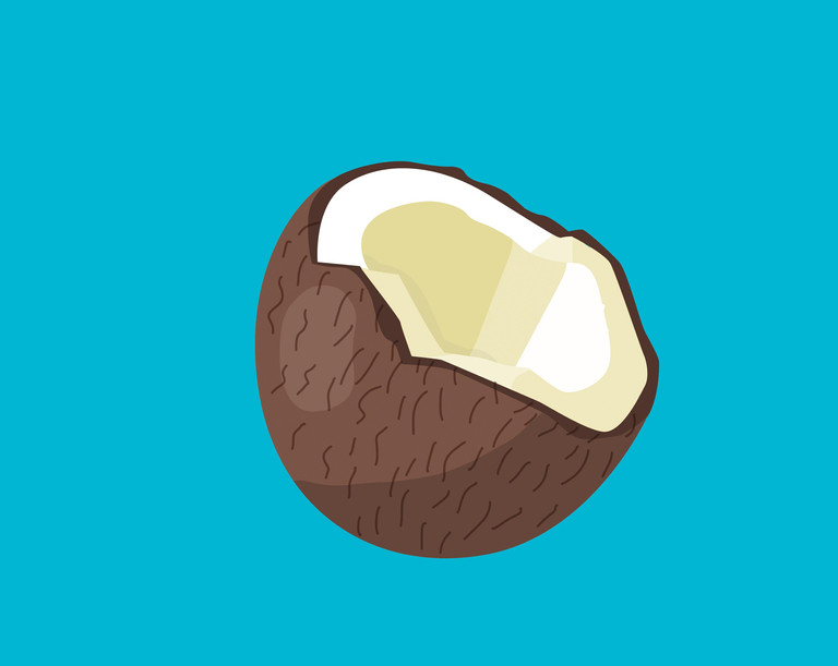 First_Phrases_coconut.jpg