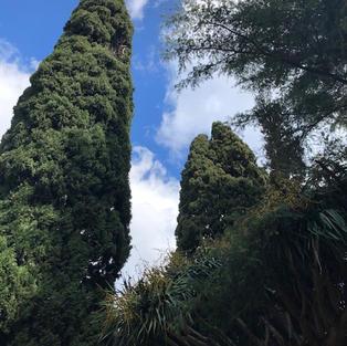 Magnificent evergreens