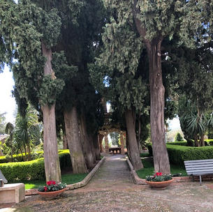 Welcoming Olive Trees