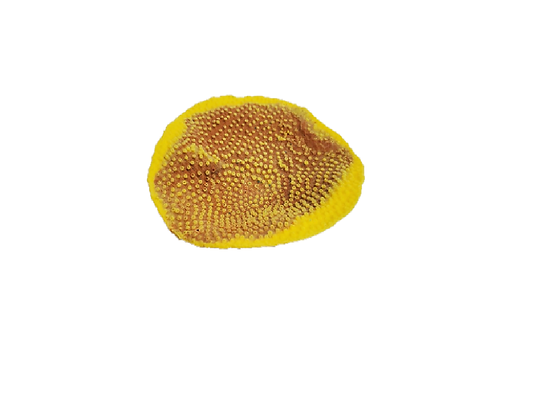 Small Cup Coral