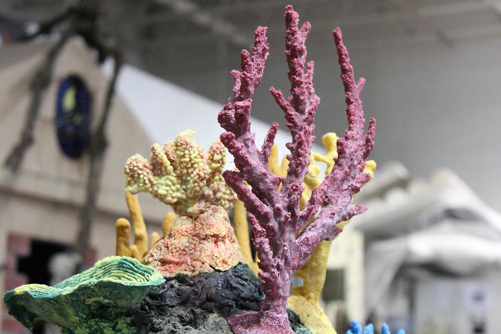 Acropora florida on an Aquarium insert
