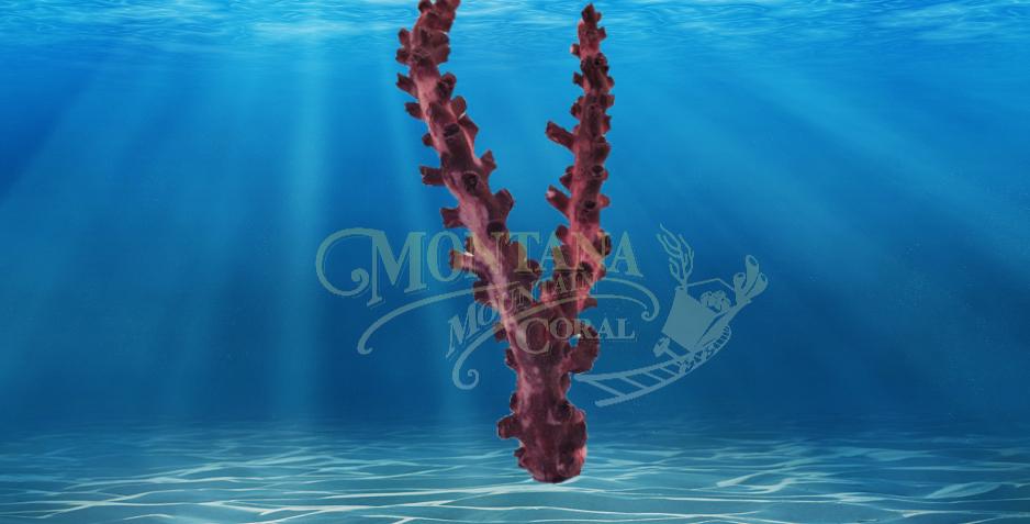 Octopus Branch Medium #179