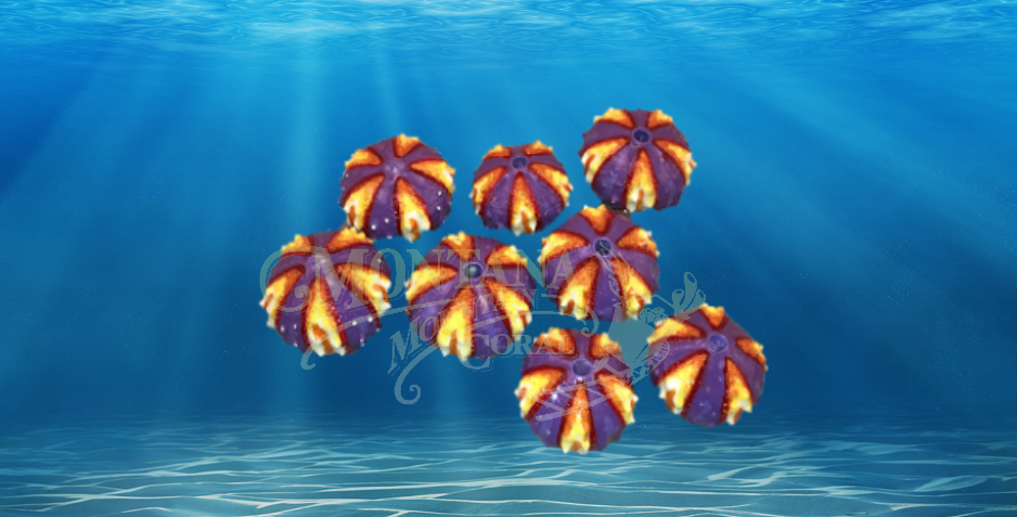 Painted Urchins Small #900