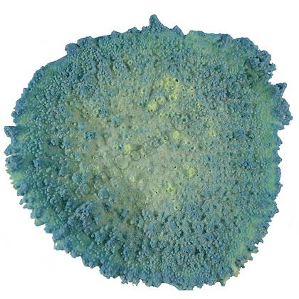 Medium Efflorescence Plate