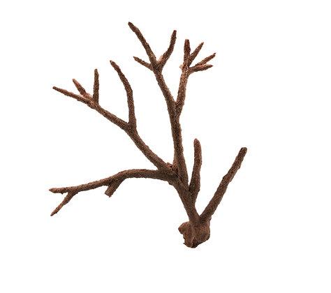 Staghorn Branch XL