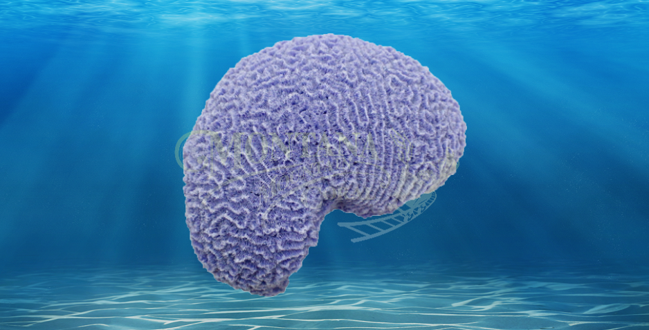 Brain Worm Large #311