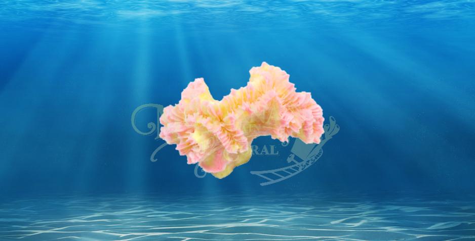 Pearl Coral Small #355