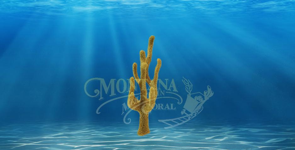 Finger Sponge Small #409