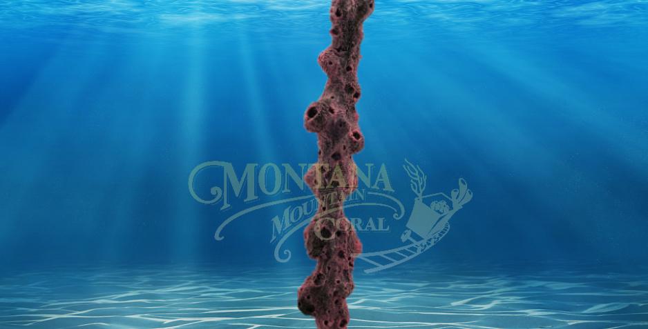 Column Coral XL #573