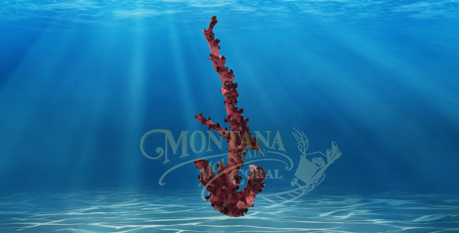 Octopus Branch Medium #178