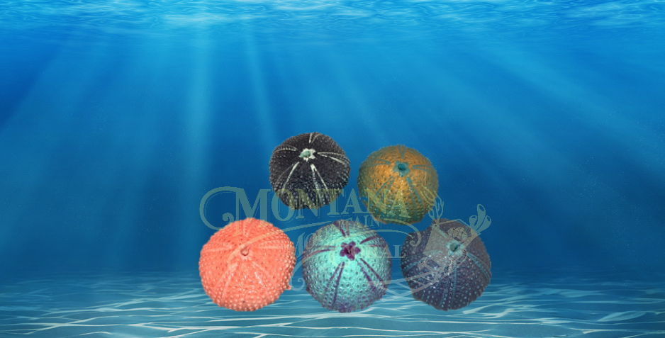 Painted Urchins Small #901
