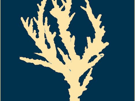 For The Love of Coral: Our Favorite Corals