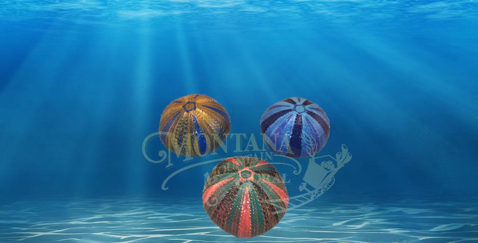 Painted Urchins Medium #905