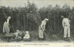 hemp farmer history.jpg