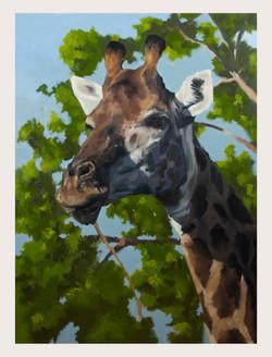 Giraffe-framed