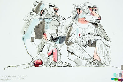 babboon drawing