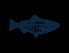 Illust-Element-Finfish-RGB-DBLUE-02.png