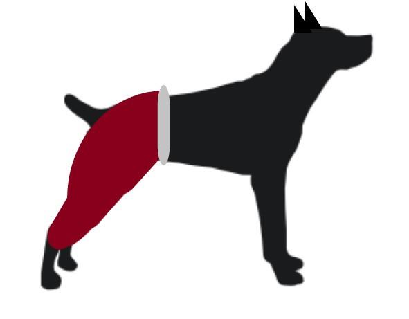 El Perro con pantalones