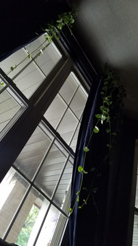 hanging live plants from the top of the