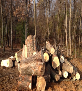 log's ready to sawmill into lumber