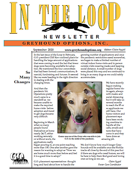 """Cover page of """"In the Loop"""", the Greyound Options, Inc. newsletter, September 2020 edition."""