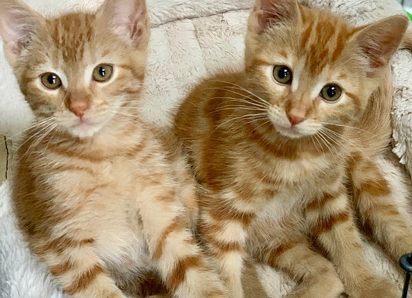 Fredrick and Finch