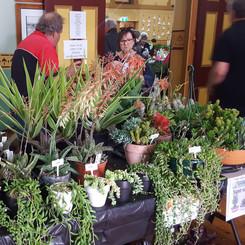Succulents & feature plants