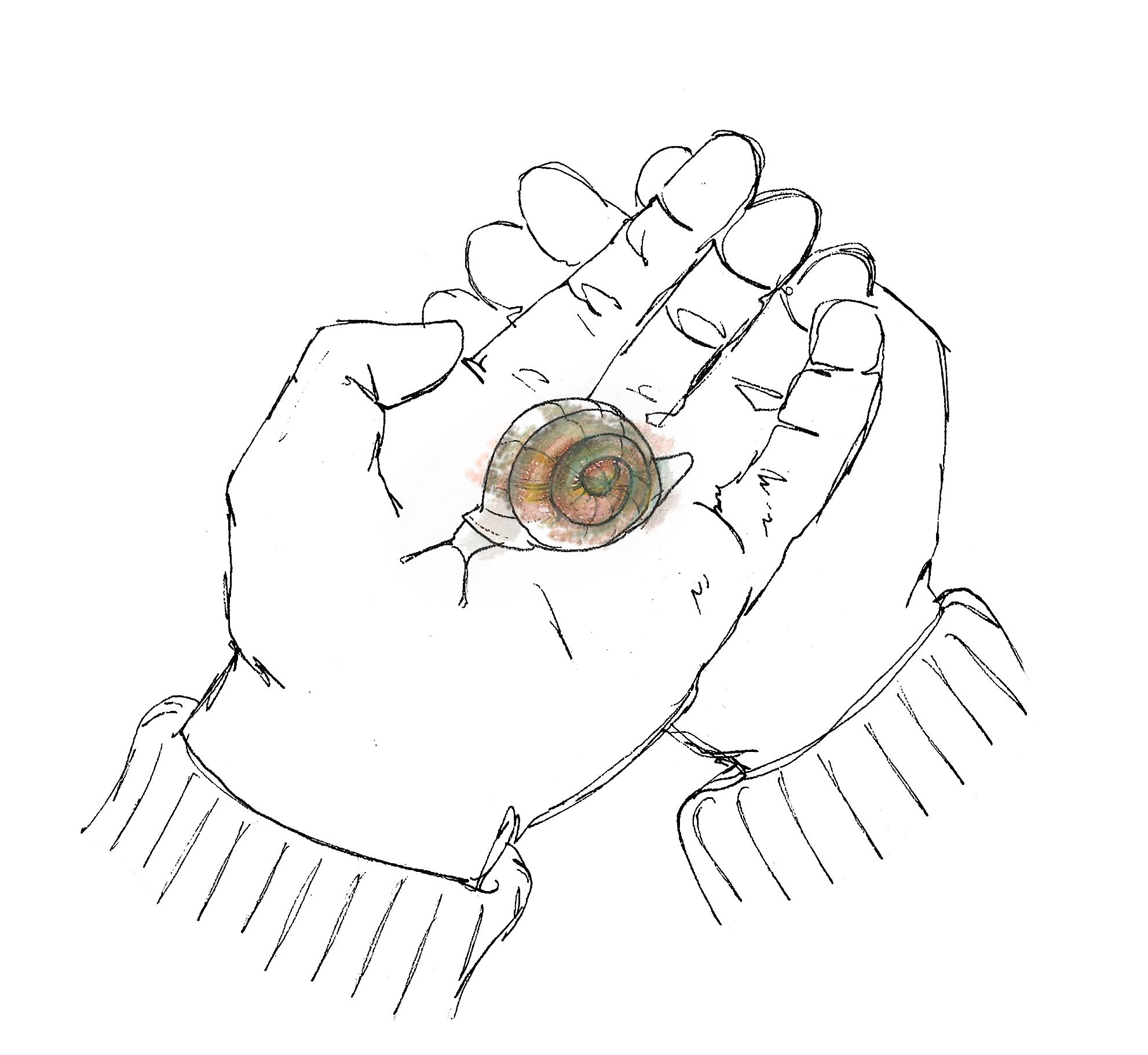 A little snail