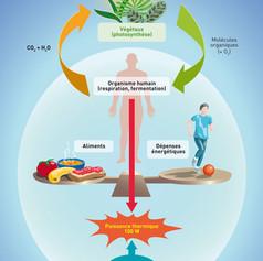 Flux d'énergie et corps humain
