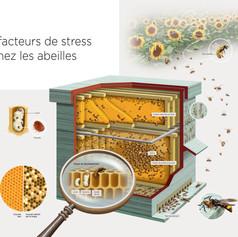 Facteurs de stress chez les abeilles
