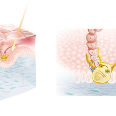 Mélanocyte