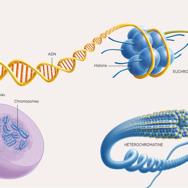 Épigénétique 1