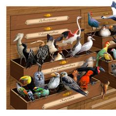 Un nouvel arbre évolutif chez les oiseaux