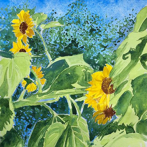 Sunflowers XVI