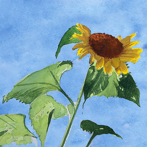 Sunflowers XX