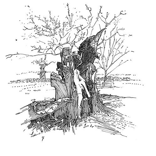 Tree Trunk, Bradgate Park I