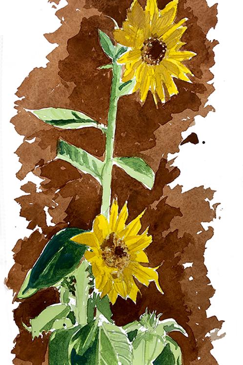 Sunflowers XIX