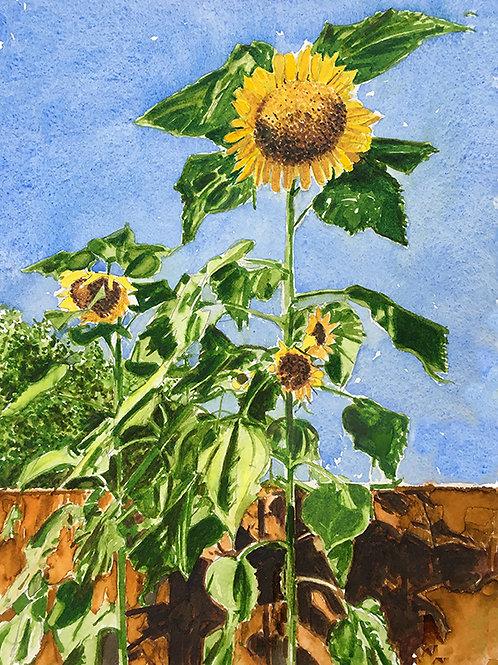 Sunflowers XXII