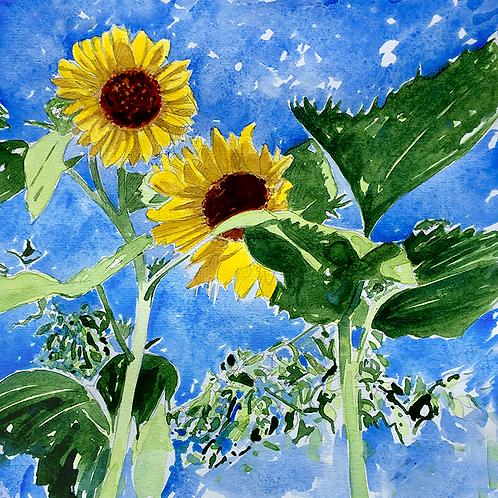 Sunflowers XV