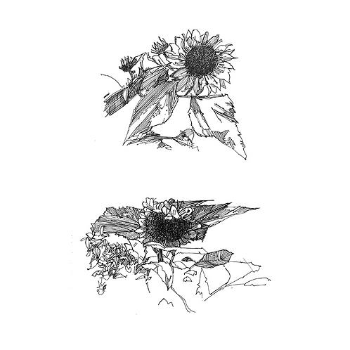 Sunflower VI