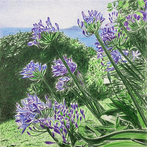Greeting cards - Agapanthuses on The Isles of Scilly