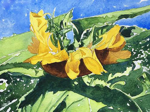 Sunflowers VI