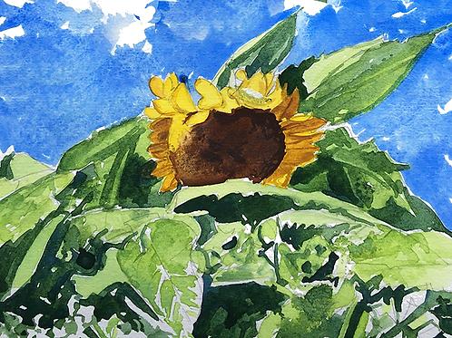 Sunflowers XXI