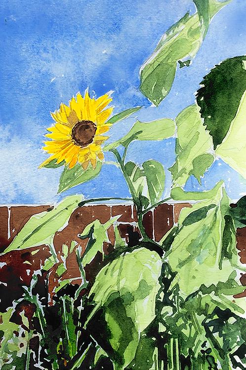 Sunflowers XI
