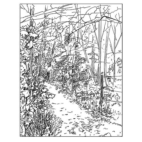 Path Through Jubilee Wood II
